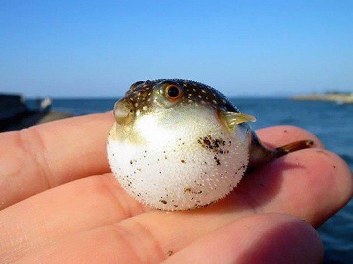 Тези животни са толкова малки, че могат да се поберат в дланта ви.. По-сладко нещо виждали ли сте? 9