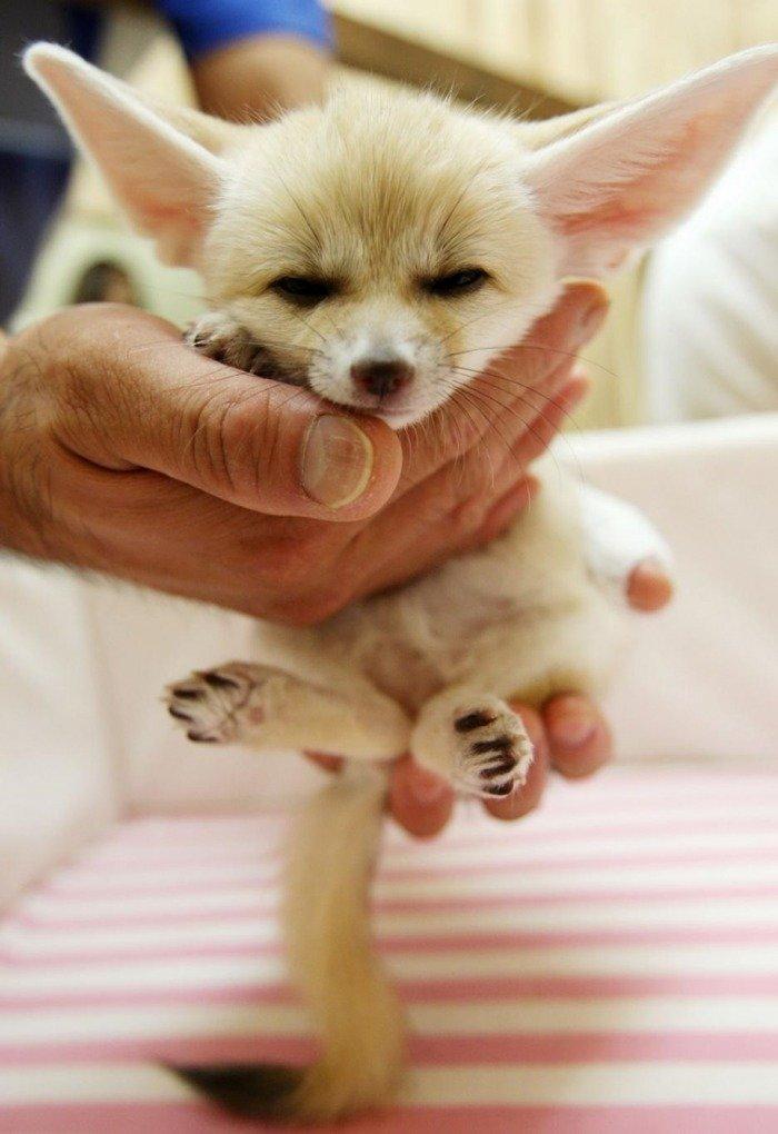 Тези животни са толкова малки, че могат да се поберат в дланта ви.. По-сладко нещо виждали ли сте? 10