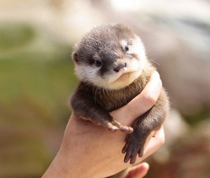 Тези животни са толкова малки, че могат да се поберат в дланта ви.. По-сладко нещо виждали ли сте? 12