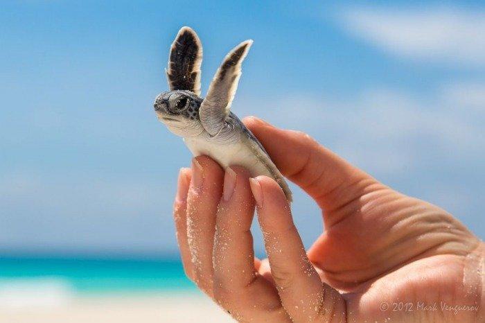 Тези животни са толкова малки, че могат да се поберат в дланта ви.. По-сладко нещо виждали ли сте? 14