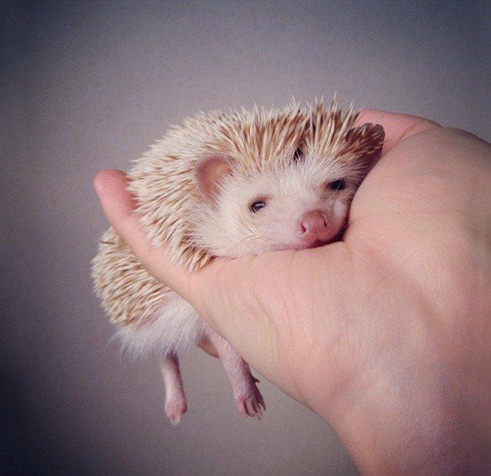 Тези животни са толкова малки, че могат да се поберат в дланта ви.. По-сладко нещо виждали ли сте? 15