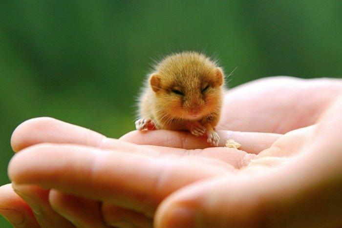 Тези животни са толкова малки, че могат да се поберат в дланта ви.. По-сладко нещо виждали ли сте? 40