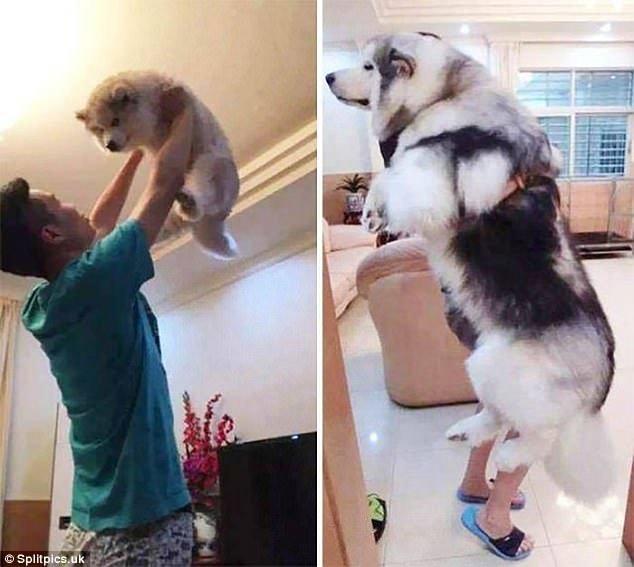 Тези кученца бяха малки и сладки, но какво стана като пораснаха.. Няма да повярваш как.. 36