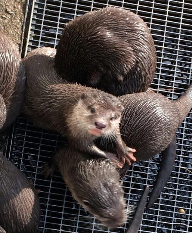 Няма да повярваш! Тези животни притежаваш истински човешки качества! Виж ги! 12