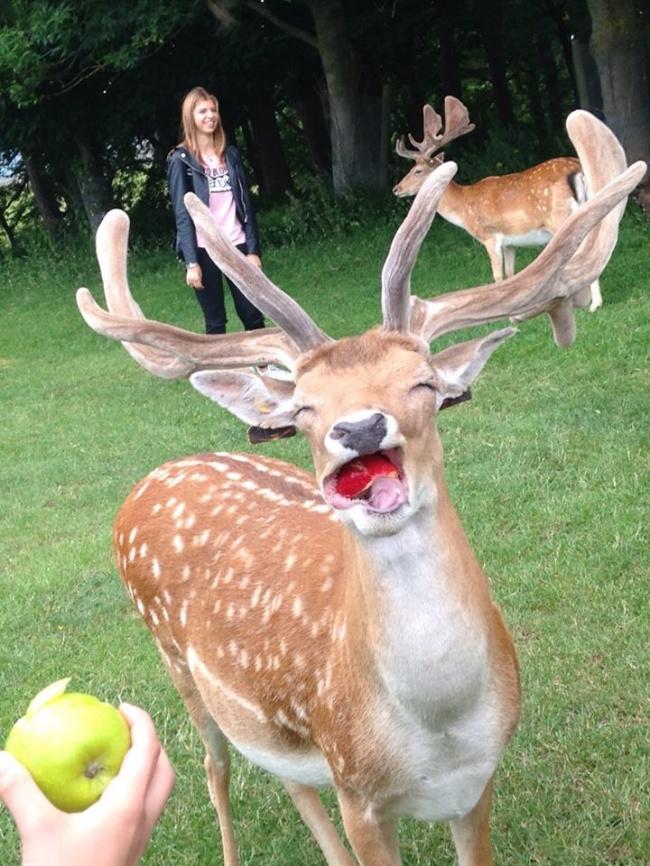16 Животни, които знаят как да позират за перфектната снимка по-добре от теб 10