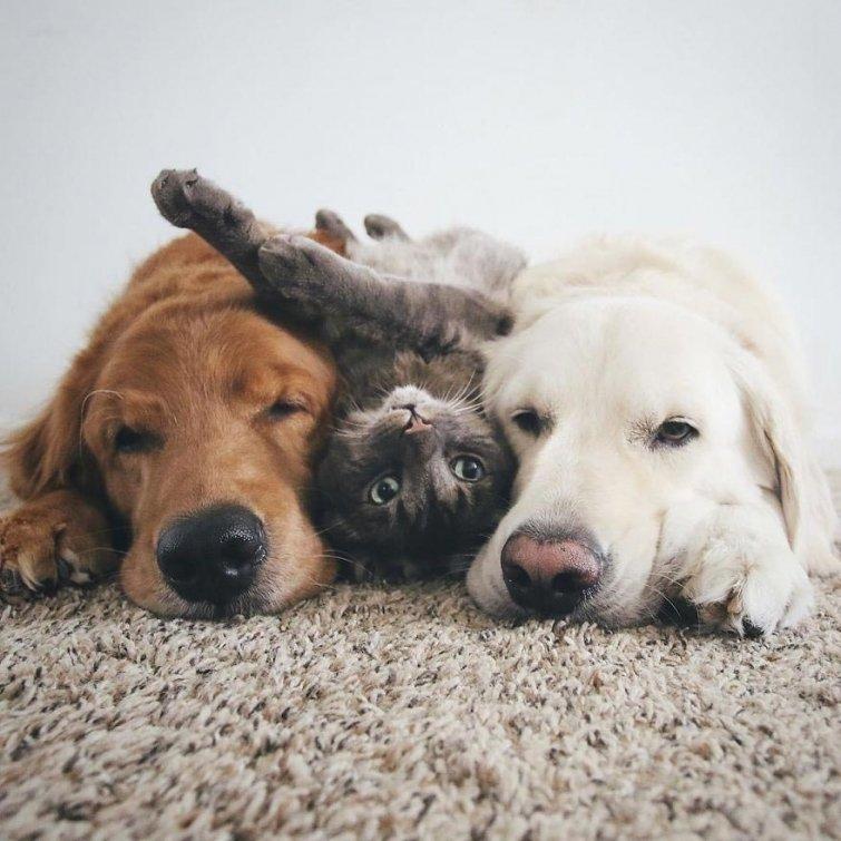 Няма да повярваш, но тези кучета и това коте живеят в перфектен синхрон.. Вижте историята им! 57