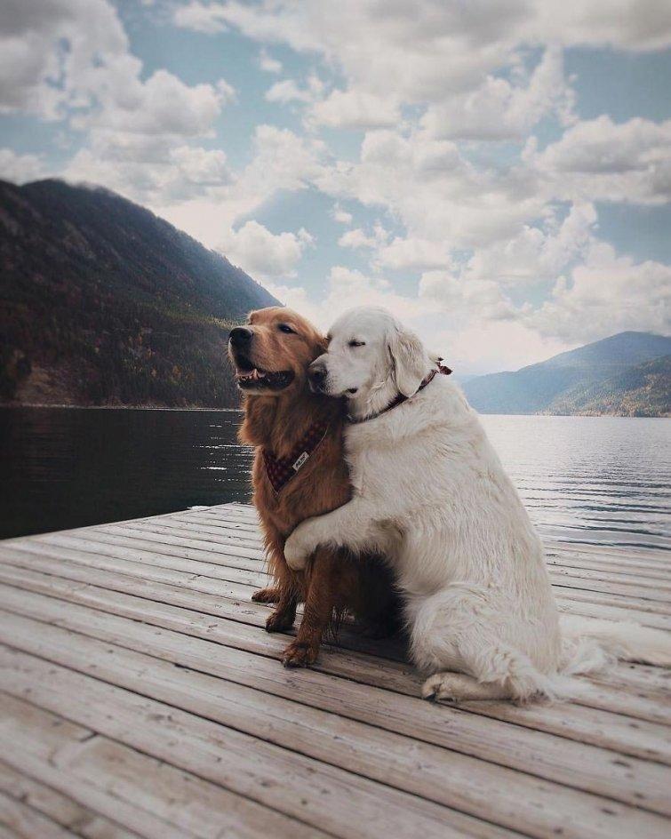 Няма да повярваш, но тези кучета и това коте живеят в перфектен синхрон.. Вижте историята им! 61