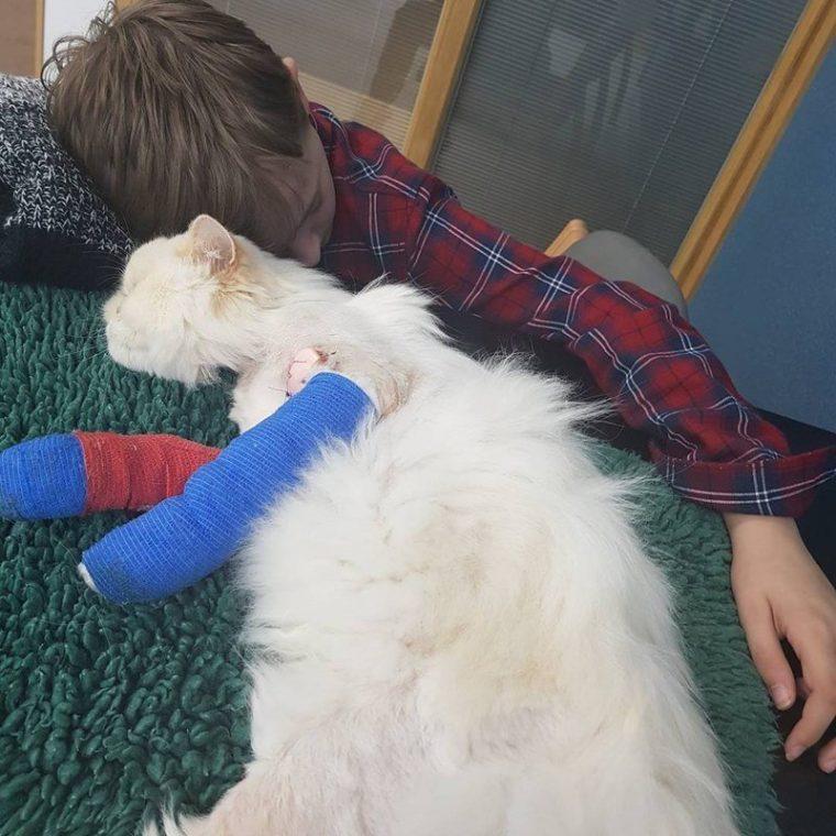 Това смъртно ранено коте се грижи за болно момче.. Трогателна история! 37