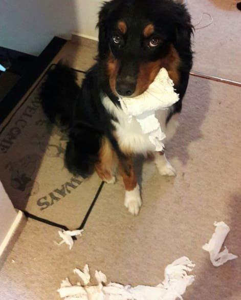 Тези кучета изобщо не се чувстват виновни за това което са извършили.. Душички.. 9