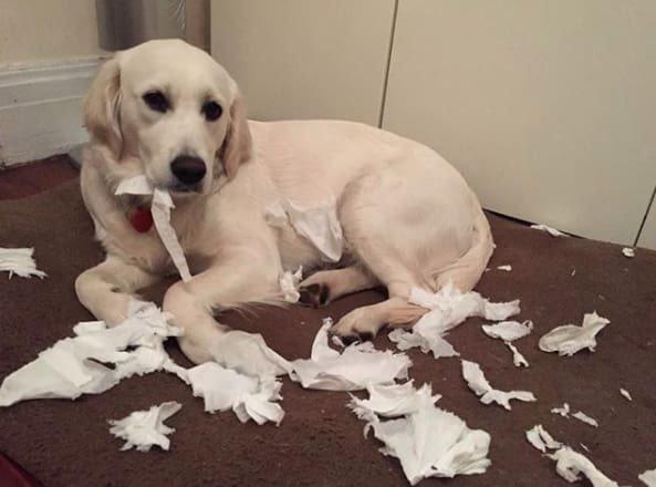 Тези кучета изобщо не се чувстват виновни за това което са извършили.. Душички.. 13