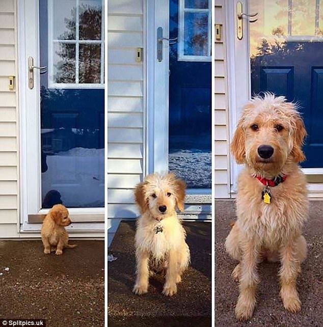 Тези кученца бяха малки и сладки, но какво стана като пораснаха.. Няма да повярваш как.. 33