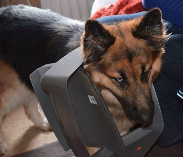 Тези кучета изобщо не се чувстват виновни за това което са извършили.. Душички.. 10