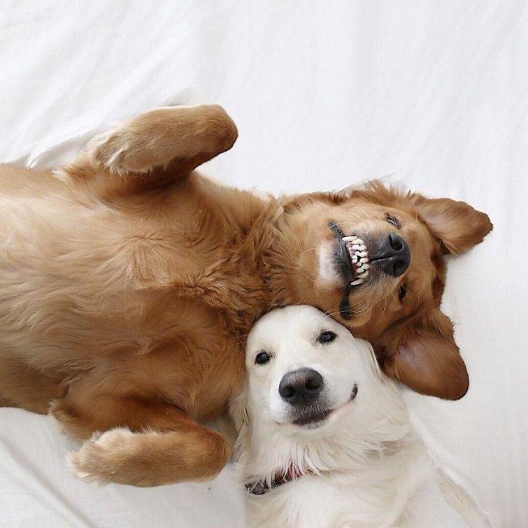 Няма да повярваш, но тези кучета и това коте живеят в перфектен синхрон.. Вижте историята им! 8