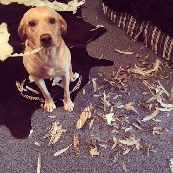 Тези кучета изобщо не се чувстват виновни за това което са извършили.. Душички.. 12