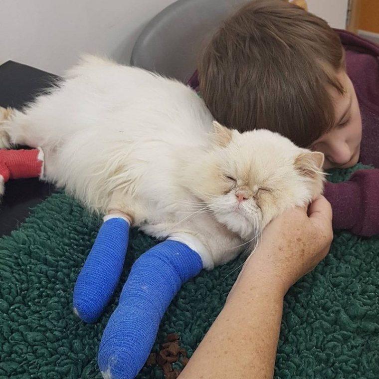Това смъртно ранено коте се грижи за болно момче.. Трогателна история! 36