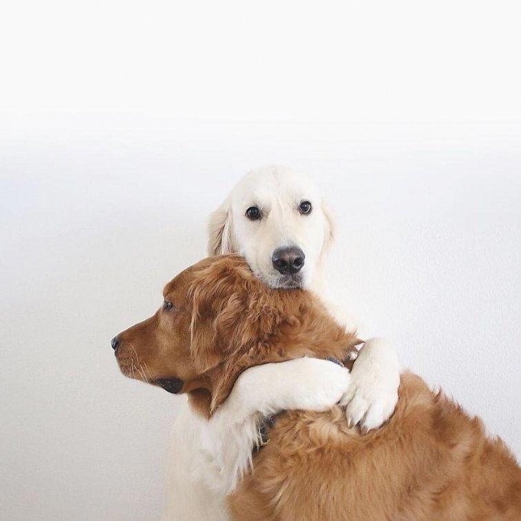 Няма да повярваш, но тези кучета и това коте живеят в перфектен синхрон.. Вижте историята им! 60