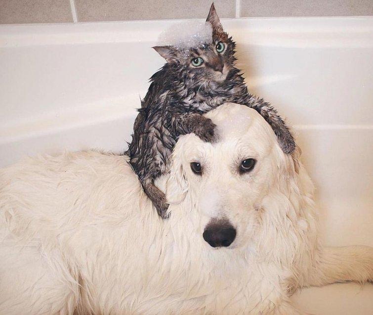 Няма да повярваш, но тези кучета и това коте живеят в перфектен синхрон.. Вижте историята им! 55