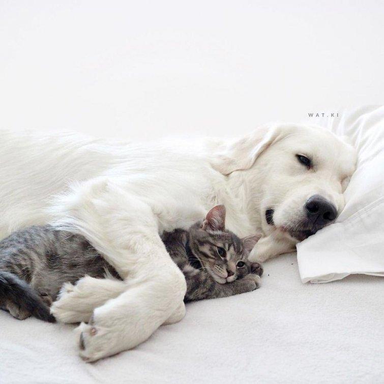 Няма да повярваш, но тези кучета и това коте живеят в перфектен синхрон.. Вижте историята им! 56