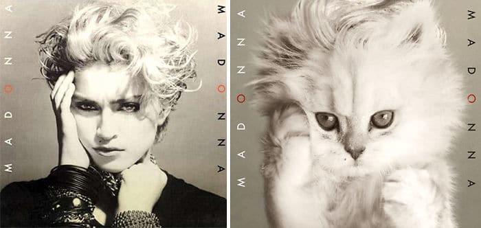 Дизайнери превърнаха тези котки във фотомодели.. Скандални прилики! 55