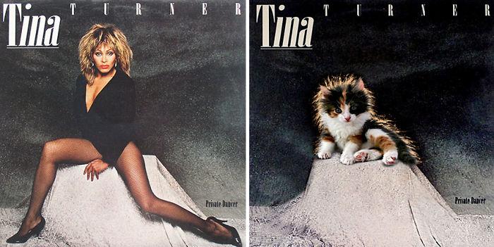 Дизайнери превърнаха тези котки във фотомодели.. Скандални прилики! 10