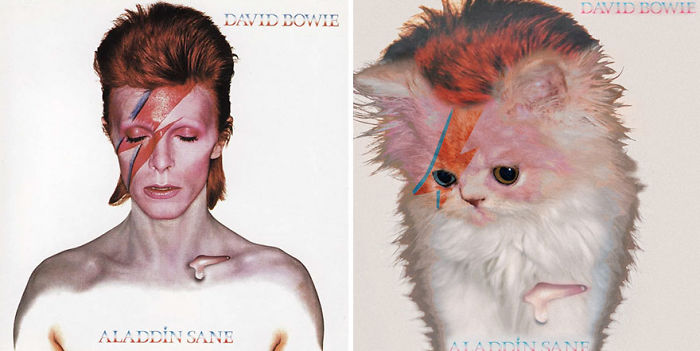 Дизайнери превърнаха тези котки във фотомодели.. Скандални прилики! 8