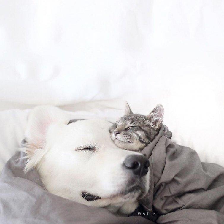 Няма да повярваш, но тези кучета и това коте живеят в перфектен синхрон.. Вижте историята им! 9