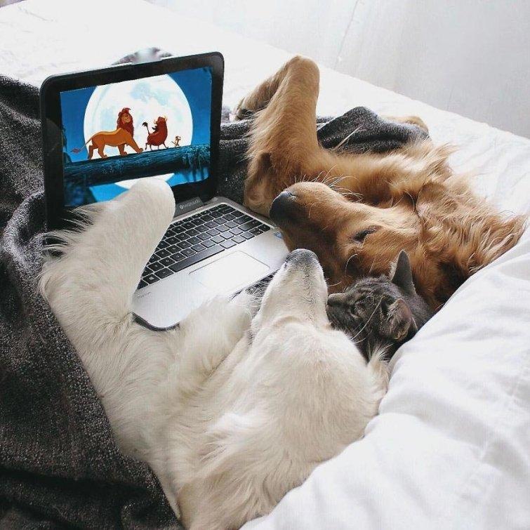 Няма да повярваш, но тези кучета и това коте живеят в перфектен синхрон.. Вижте историята им! 11