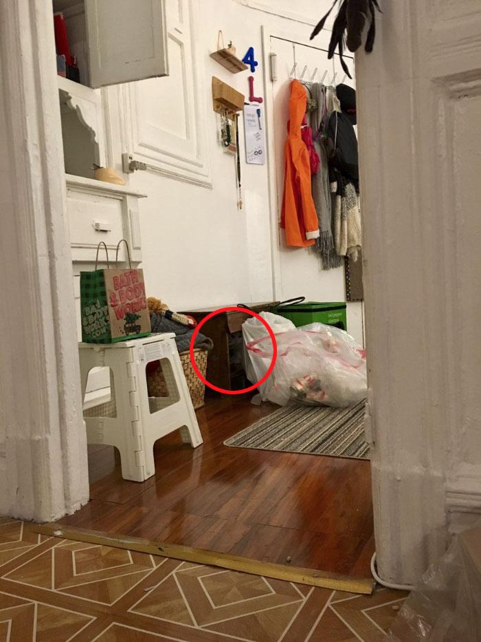 На тези снимки се крие котка.. За колко време ще успеете да я намерите? 10