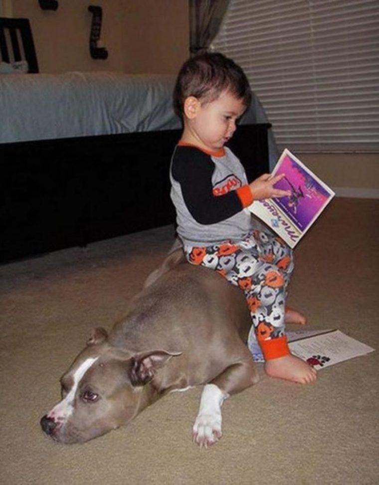 За тези деца търпението на животните е просто един огромен мираж, горките животни 12