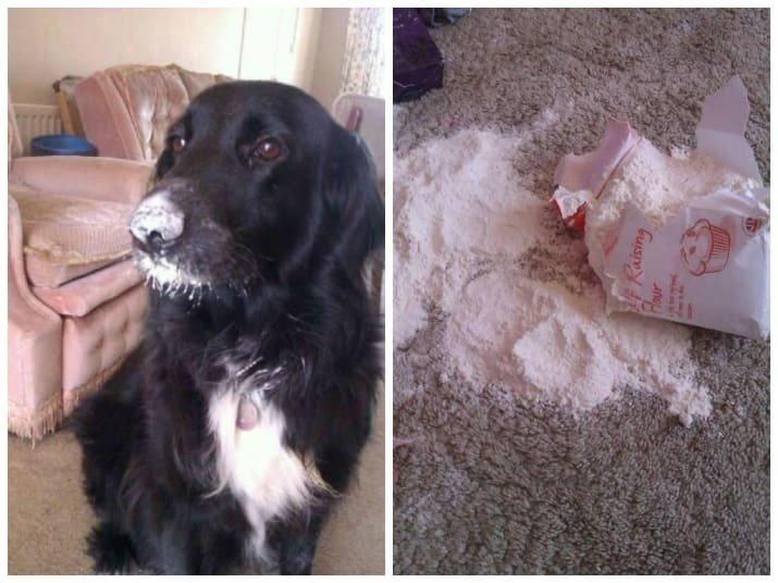 Тези кучета изобщо не се чувстват виновни за това което са извършили.. Душички.. 16