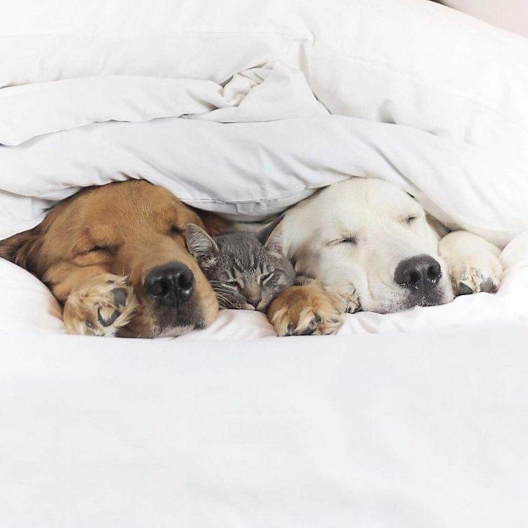 Няма да повярваш, но тези кучета и това коте живеят в перфектен синхрон.. Вижте историята им! 13