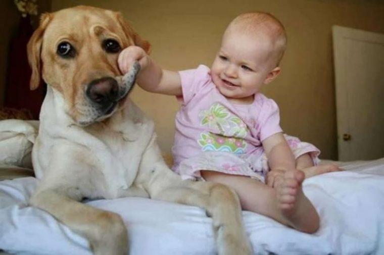 За тези деца търпението на животните е просто един огромен мираж, горките животни 59