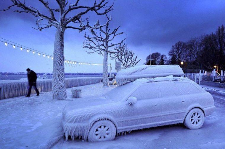 Зимните празници определено объркват сериозно психиката на хората и животните 54