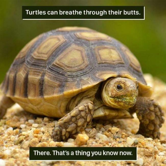 10 Доказателства, че в интернет може да намерите най-странните неща изобщо! 56