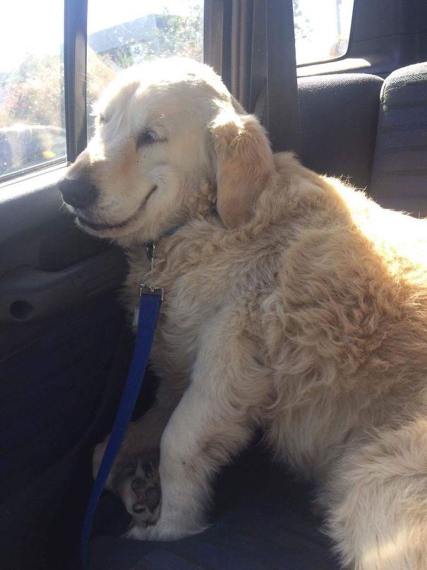 Тези домашни любими се прибраха от ветеринаря.. Техните физиономии разказват всичко 13