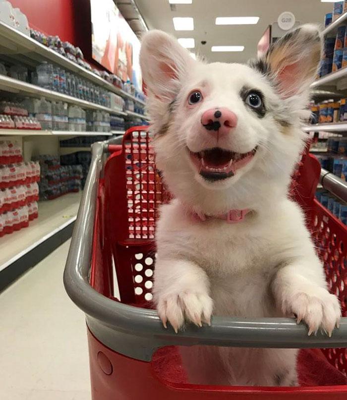 Собственик взима кучето си със себе си в магазина, а изражението му показва всичко 54