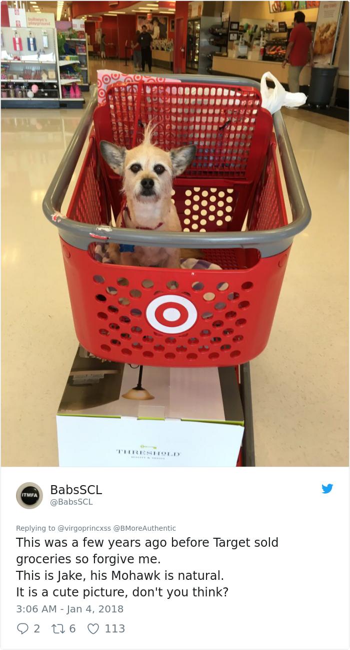Собственик взима кучето си със себе си в магазина, а изражението му показва всичко 56