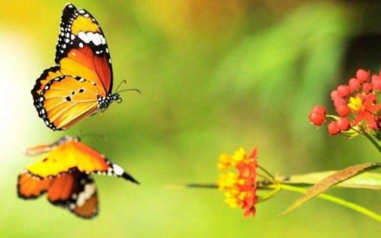 Избери пеперуда от месеца на раждането си и научи повече неща за себе си! 13