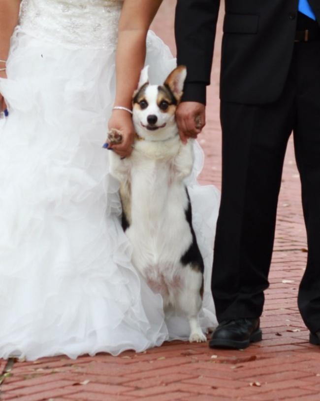 Когато сватбените фотографи уловят нещо, което не е трябвало.... 60