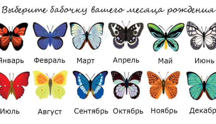 Избери пеперуда от месеца на раждането си и научи повече неща за себе си! 10