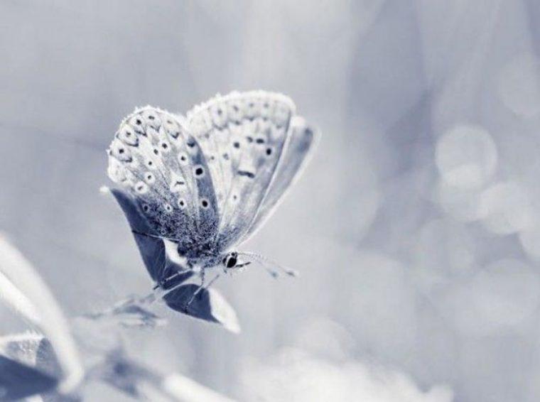 Избери пеперуда от месеца на раждането си и научи повече неща за себе си! 11