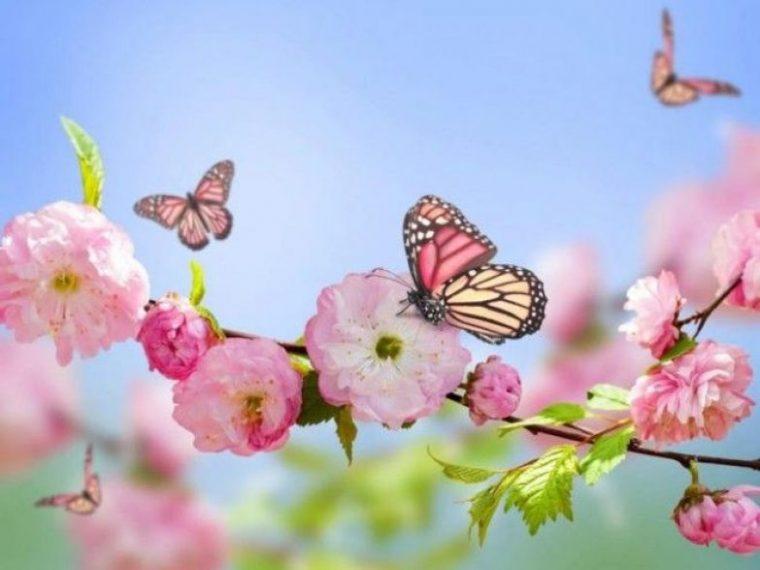 Избери пеперуда от месеца на раждането си и научи повече неща за себе си! 12