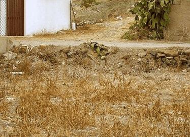 Можете ли да забележите котките в тези снимки в рамките на една минута? Това е по-трудно, отколкото изглежда! 60