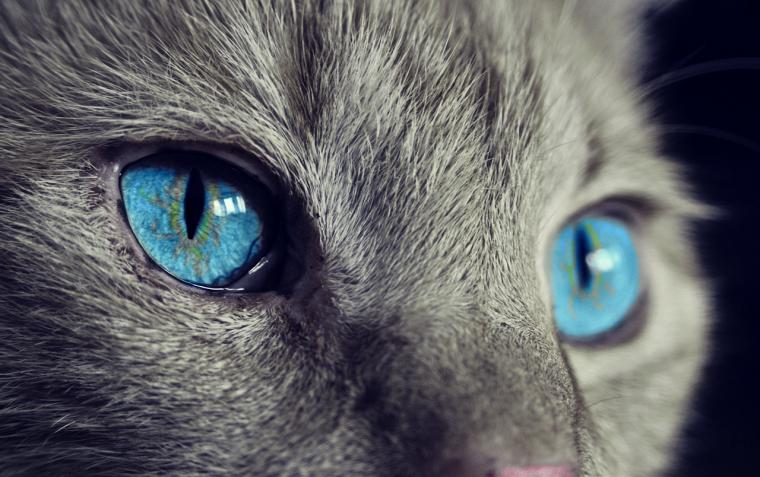 10 съвета за живота от нашите котки :) 56