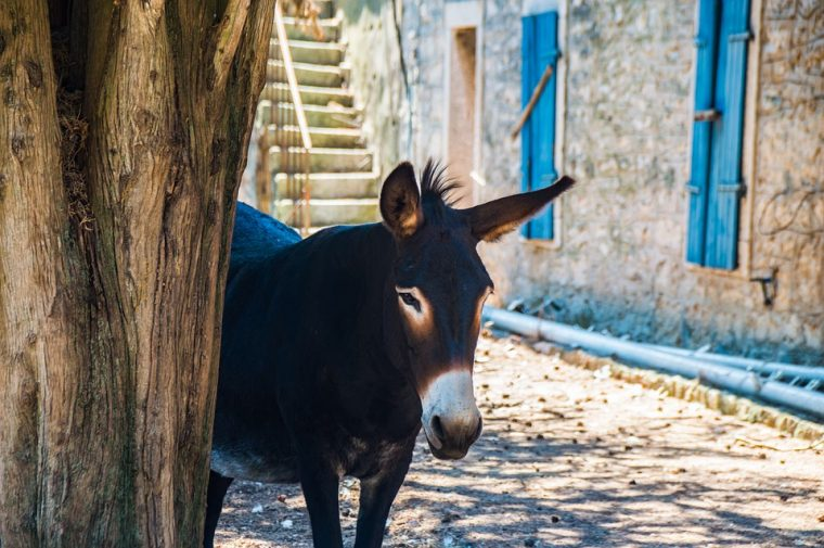 Мъдрата притча за магарето и фермера, която ни учи как да се справяме с трудностите в живота! 14