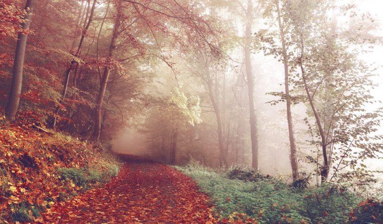 3-те зодии, които ще властват над идващата есен - нежните стихии 33