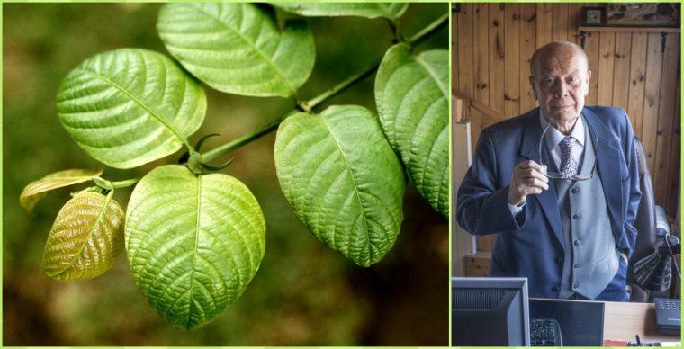 Проф. Лукашак разкри дивото растение, което пази от всякакви болести и носи отлично здраве! 56