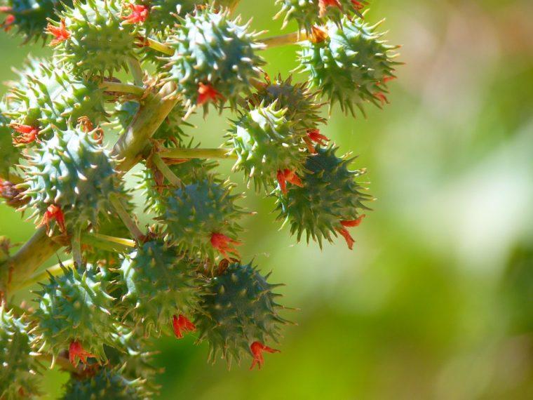 Мощен лек със сода и рициново масло - чудото на холистичната медицина! 58