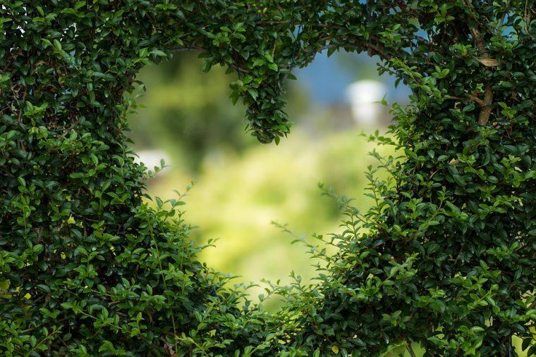 Любовта не е чувство! Тя е най-полезната храна за тялото и душата! 10