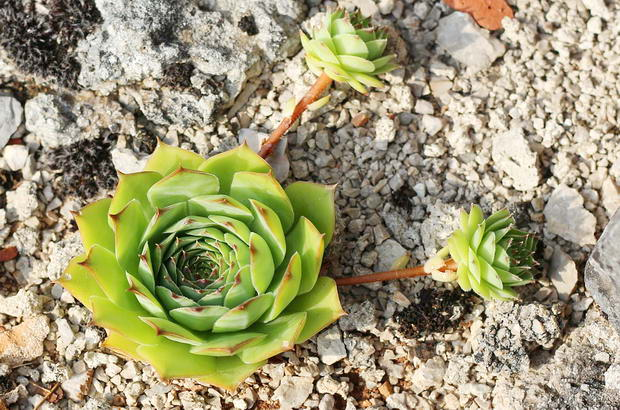 Цветете, което предпазва дома от уроки 33